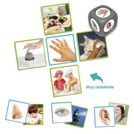 Los 5 sentidos Percepción y Gnosias
